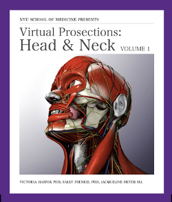 Virtual Prosections: The Series