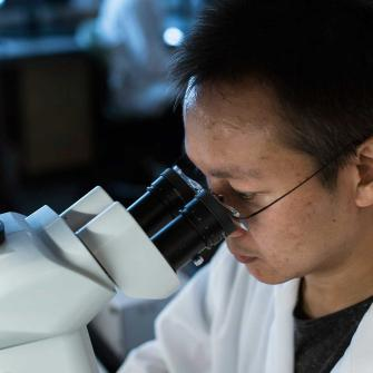Assistant Professor Guang Yang Looks Into Microscope